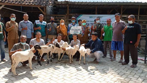 Perkuat Ekonomi, Nurul Hayat Zakat Kita Luncurkan program Ternak Desa Sejahtera