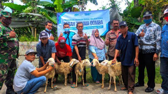 Tahun 2021! Ada Lima Puluh Domba Baru untuk Peternak Kediri