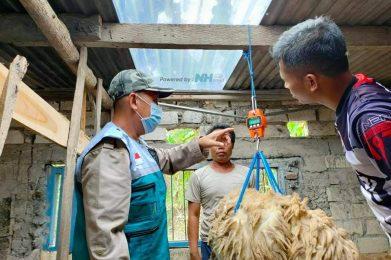 Program ternak desa sejahtera NH Tuban